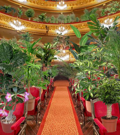 La platea del teatro Liceo con las plantas que ocupan sus butacas como espectadoras de un concierto.