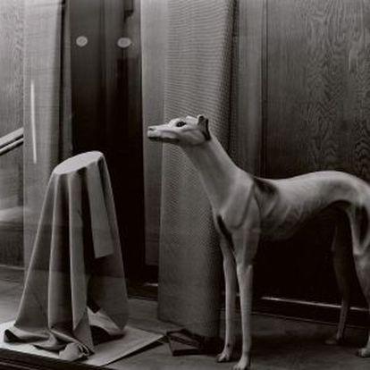 'Sastrería La Neutre, Barcelona', de Ferran Freixa, 1979.