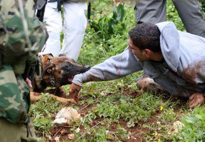 Un perro policía israelí ataca a un manifestante en la ciudad de Kedum, en Cisjordania.