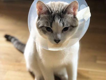 Los dos (o tres) días en los que 'Atún' fue un gato tranquilo