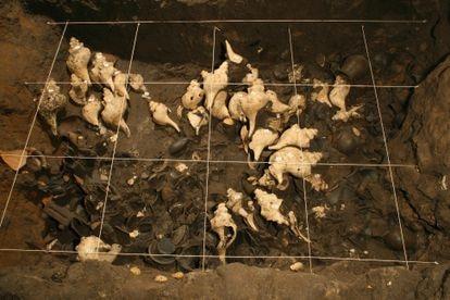 Caracoles, posiblemente provenientes del Golfo de México. INAH