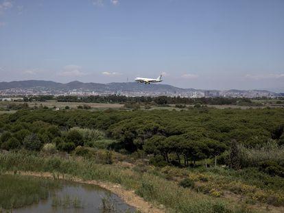 Un avión sobrevuela el delta del río Llobregat, al lado del aeropuerto de El Prat de Barcelona.