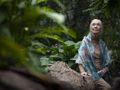 Jane Goodall, en Barcelona en diciembre de 2018