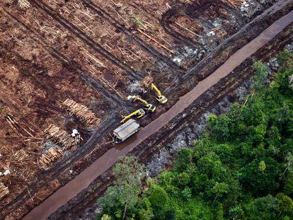 La deforestación provocada por la expansión del cultivo de aceite de palma industrial no solo conlleva la destrucción de la flora y fauna, sino también la eclosión de nuevos virus y microbios.