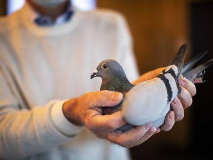 El copropietario de la casa de subastas Pipa, especializada en palomas, muestra a New Kim.
