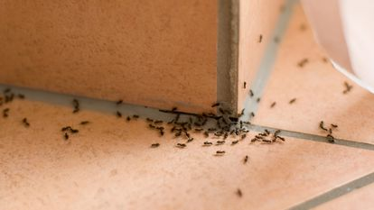 Elegimos una serie de productos, repelentes e insecticidas para eliminar las hormigas de casa durante el verano.