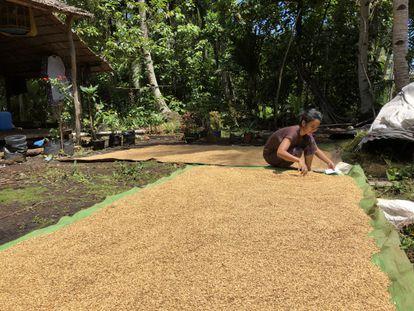 Una mujer secando granos al sol en Kalimantan occidental, Indonesia. Una concesión de aceite de palma se superpone a sus tierras de cultivo y amenaza el acceso a alimentos para ella y de su familia.