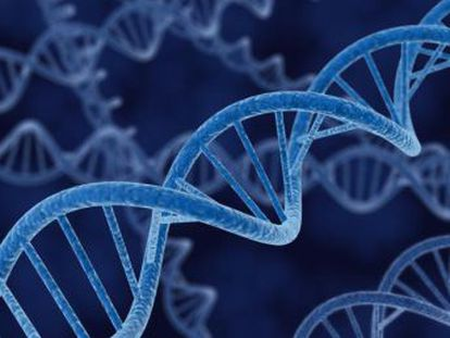 Una innovación del sistema CRISPR consigue que estos animales recuperen la sensibilidad a la luz y una mejora parcial de su retina