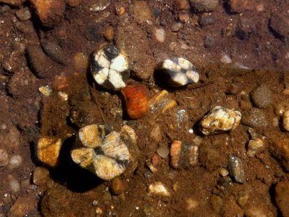 Ejemplares de Andalucita, un mineral atribuido a las lágrimas de una joven española por su amante araucano.