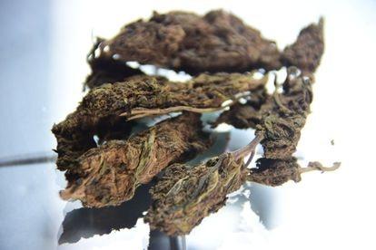 La marihuana producida en Colombia es más potente y en Brasil puede costar hasta seis veces más que la paraguaya.
