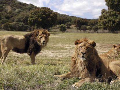 Los reyes de la selva