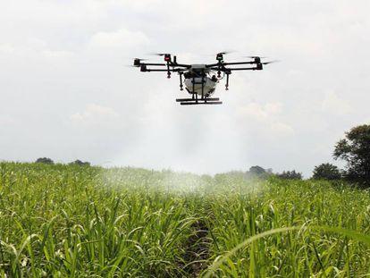 Fumigación de un campo de caña de azúcar mediante un dron.