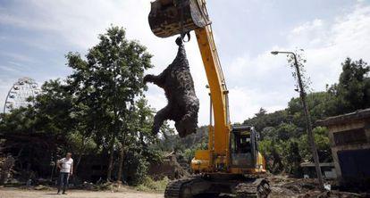 Una excavadora recoge un oso muerto que huyó del zoológico de Tbilisi (Georgia) tras las inundaciones del domingo. Un tigre mata a una persona.
