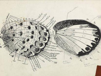 Esquema detallado del ala de una mariposa.