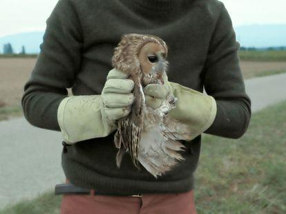 Antonin y una de las aves rescatadas, en un momento de 'Bird Island'