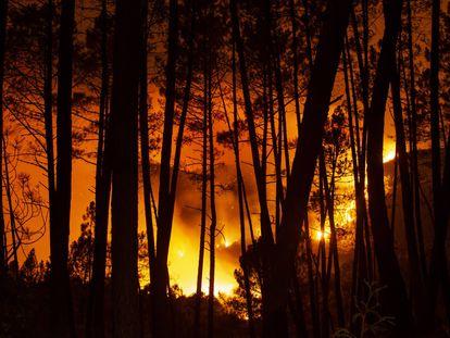 El incendio de Lugo,en imágenes