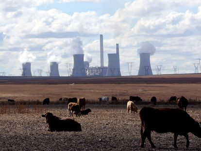 Varias vacas delante de una central eléctrica de carbón en Sudáfrica.