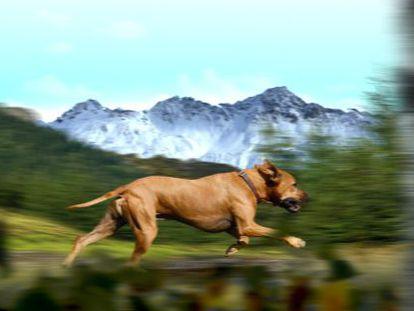 'Running Dog' (2013), de Arnaud Dézoteux, uno de los filmes que se estrenará en Loop.