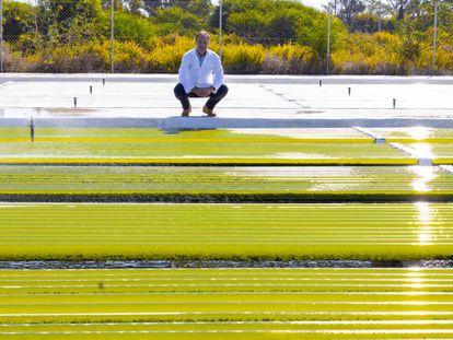 Carlos Unamunzaga, director, ante los cultivos de microalgas.
