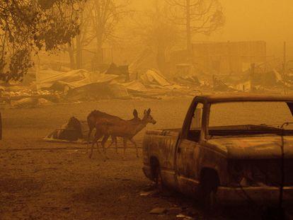 Los incendios forestales se extienden por el continente americano en los últimos meses. FOTO:AP|VIDEO: Reuters