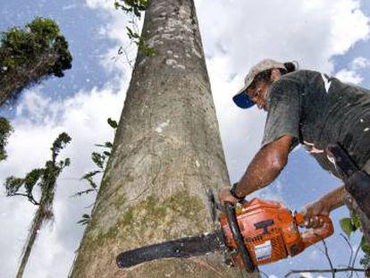 Explotación forestal en el Amazonas.