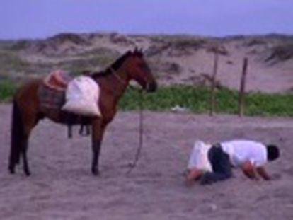 El 80% de los huevos desovados en playas mexicanas son saqueados