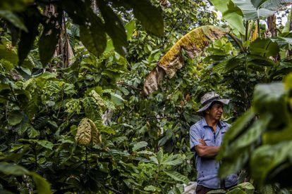 Luis Quezada permanece en medio de la tupida vegetación de su finca, en la Amazonia ecuatoriana.