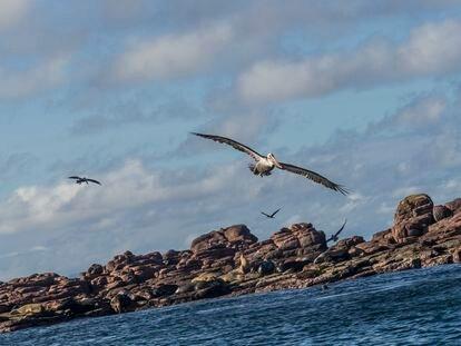 Pelícanos y lobos de mar en uno de los islotes que forman parte del archipiélago Espíritu Santo, en el Mar de Cortés, Baja California Sur, México.