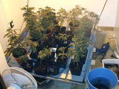 Plantas de marihuana en la terraza de una casa.