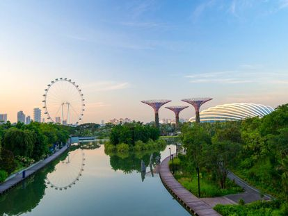 La bahía de Singapur se ha convertido en un centro de innovación que integra tecnología con naturaleza. A la derecha, los Super Trees, unos jardines verticales —algunos equipados con sistemas fotovoltaicos— diseñados por el estudio de arquitectura y paisajismo Grant Associates. Forman parte del proyecto Jardines junto a la bahía, de la red de parques nacionales de Singapur, con el que se pretende cultivar 226.000 plantas de todos los ecosistemas. |