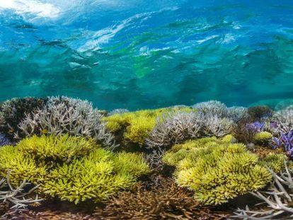 Fotograma del documental 'Chasing coral', de Richard Vevers.