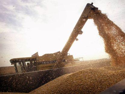 Carga de un camión con maiz transgénico del tipo BT-corn, en Rockton (EE UU).
