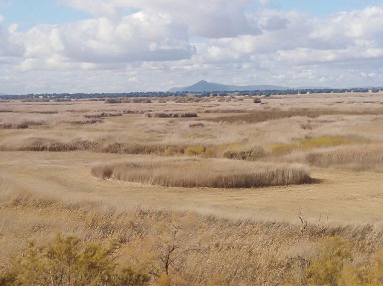 Una de las lagunas de las Tablas de Daimiel seca, en junio.