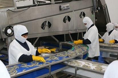 Ecuador exportó 688.000 toneladas de camarón en 2020.