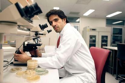 Hosam Zowawi examina bacterias resistentes a los antibióticos en la universidad de Queensland (Brisbane, Australia).