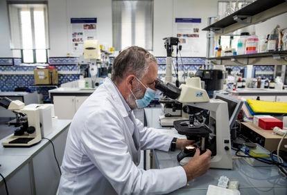 El farmacéutico investigador Pedro Torres dirige el laboratorio de lepra en Fontilles.