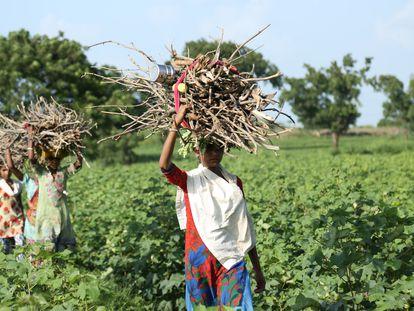Un grupo de mujeres recoge leña en el estado de Maharashtra, en India.