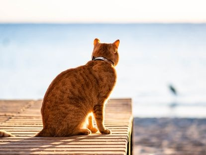 Un gato en Marsa Alam (Egipto).