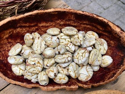 SEMILLAS DE MACAMBO TOSTADAS / CAPEL