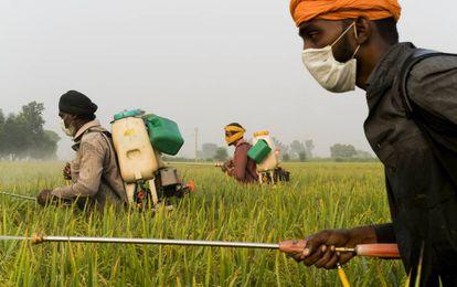 Agricultores rocían con pesticida los campos en Mari Mustafa (India).