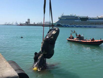 Extracción de los restos del cachalote del puerto de Valencia.