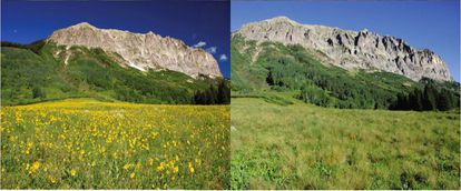 Diferencia en el albedo del terreno donde se hizo el estudio. A la izquierda con flores, a la derecha sin ellas.
