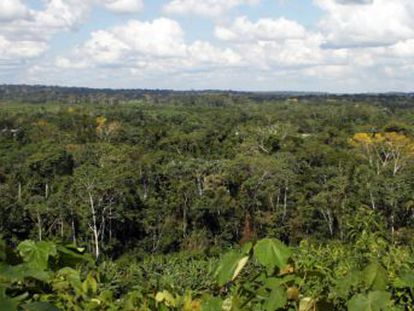 La minería, legal o no, está acabando con la biodiversidad de la mayor selva del mundo y mermando la salud y el hábitat de miles de indígenas