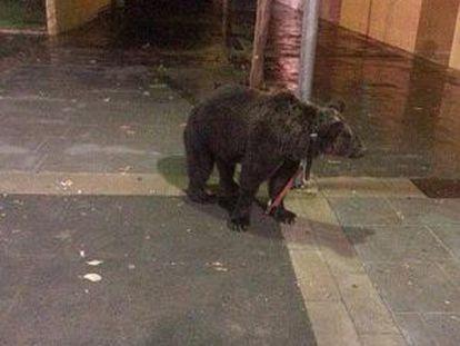 El oso, atado en la farola en Cárcer en una imagen de FAADA.