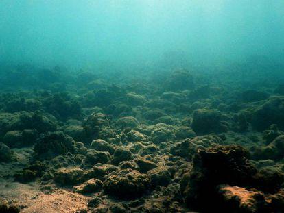Panorama del arrecife degradado en torno a la isla de Lizard, al norte de la Gran Barrera de Coral.