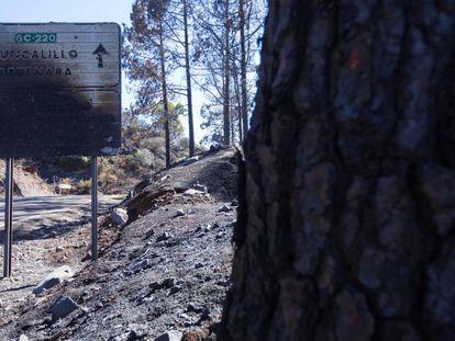 Una señal de tráfico quemada en Gáldar (Gran Canaria).