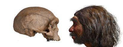 A la izquierda, el cráneo del 'Homo longi', a la derecha, una reconstrucción de su aspecto.