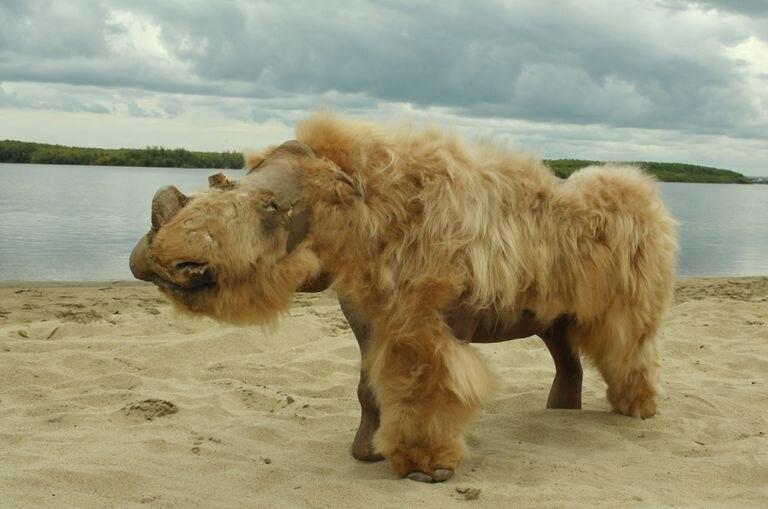 Un rinoceronte lanudo.