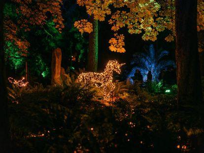 El Jardín Botánico estrena una instalación lumínica que traslada a un bosque encantado y la capital introduce nuevos diseños en calles hasta este año sin iluminar. |