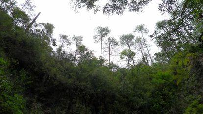 Un bosque en Oaxaca, México.